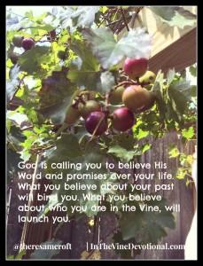 grapesondavevinesblogpost