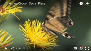 cocoonbutterfly